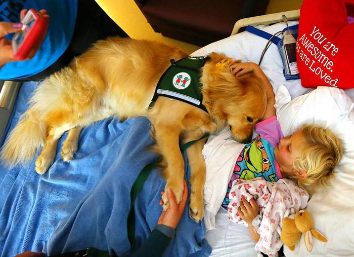 Vybraní psi byli před návštěvou nemocnice pečlivě umytí, aby se snížil risk přinesení choroboplodných zárodků na minimum.